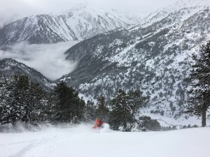 The art of focus, skiing powder through trees in the Rialb valley.